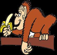 image of ape eating banana